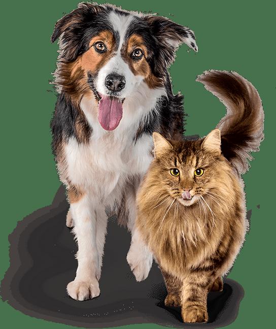 perro y gato petlounge