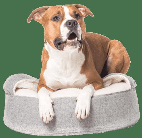 pet-lounge-cr-hospedaje-para-mascotas