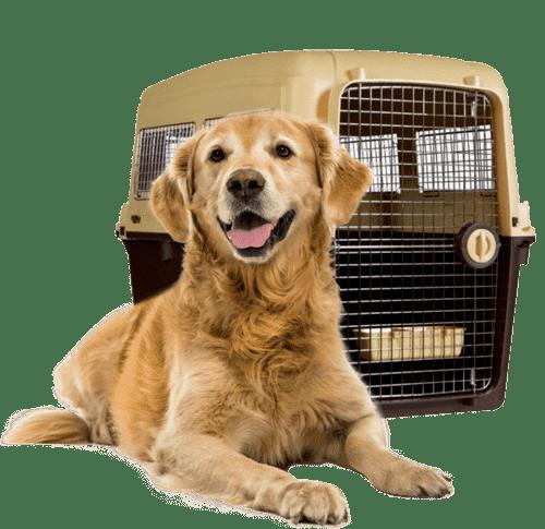 pet-lounge-logistica-transporte
