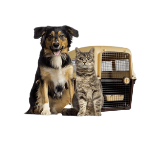 pet-lounge-logistica-transporte-aereo-mascotas-ok