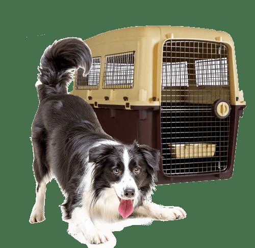 pet lounge logistica transporte aereo mascotas2